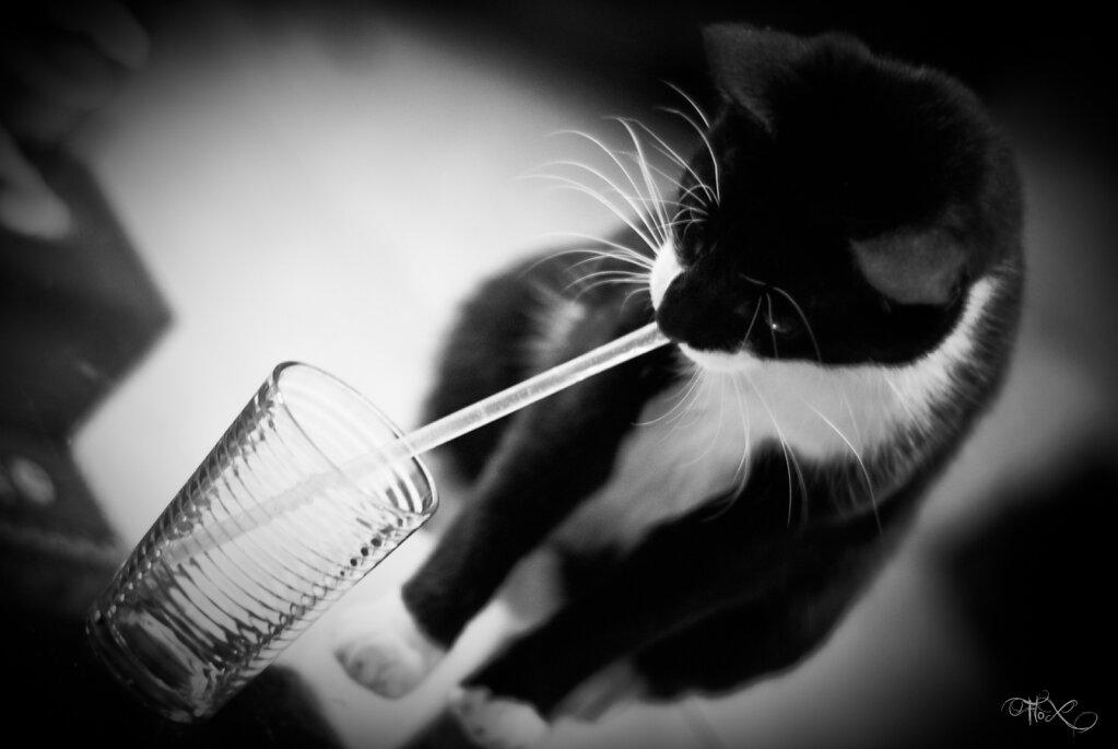 In Cat We Trust