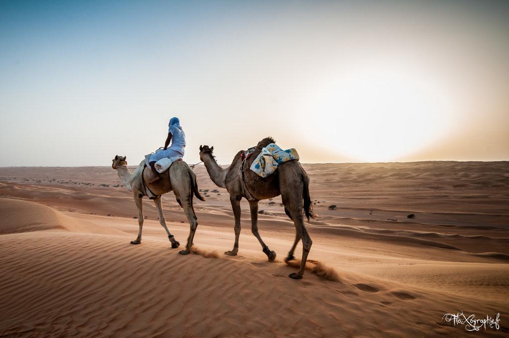 Oman - Wahiba Sands Camels