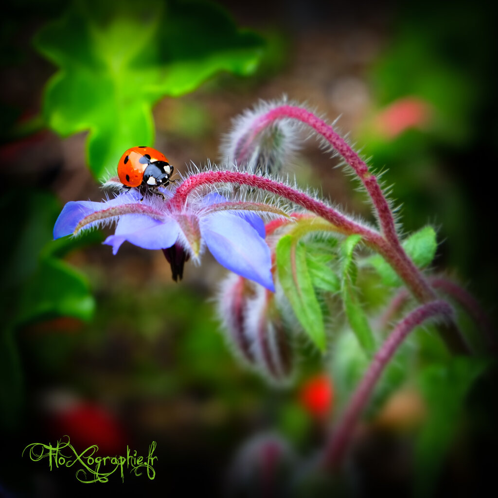 Color Ladybird